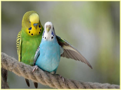 loving_birds5